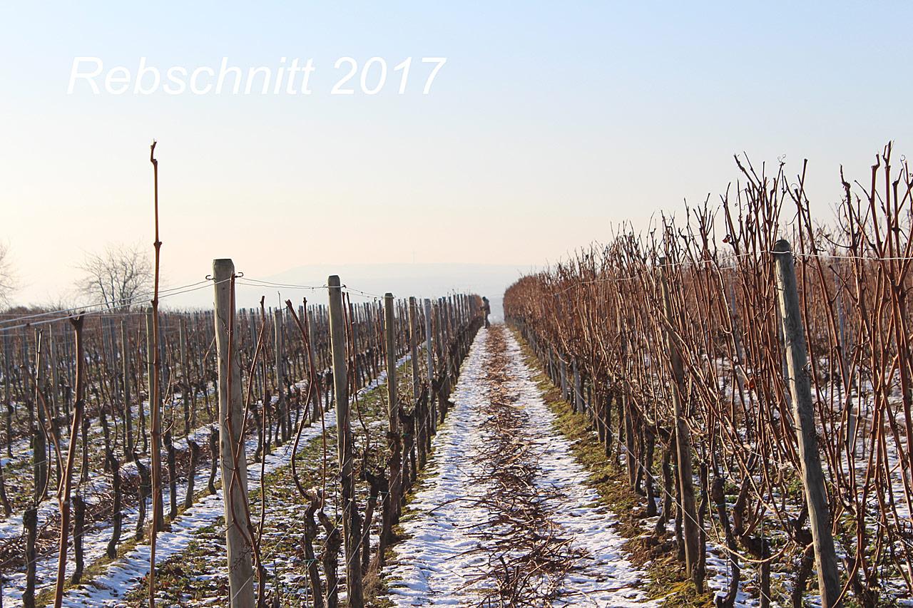 """""""Rebschnitt 2017"""""""